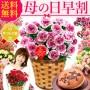 carnation_kago01c3